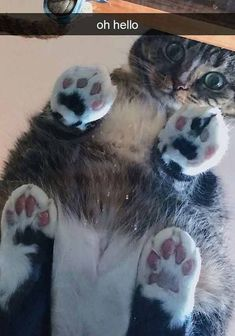 Looking for more FUNNY Cat Photos? Click The Photo to see more Looking for more FUNNY Cat Photos? Click The Photo to see Animals Doing Funny Things, Cute Funny Animals, Cute Cats, Funny Cats, Funny Cat Photos, Funny Animal Pictures, Animal Pics, Baby Pictures, Animals And Pets
