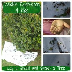 Wildlife Fun 4 Kids...mostly for young kids