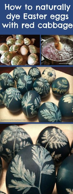 How to dye Easter eggs naturally. All you need is red cabbage, vinegar, pantyhose or cheesecloth, leaves and eggs. Easier than it looks! http://marblemounthomestead.blogspot.com/2015/04/last-minute-easter-eggs-that-are.html