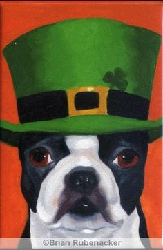 Cute Boston Terriers in Hats Pictures Made In America