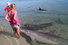 Shark Bay &  Monkey Mia (Australia). 'The waters of Shark Bay  teem with an incredible diversity of  marine life, from the world famous  dolphins of Monkey Mia to  the ancient stromatolites of Hamelin  Pool.  Explore remote Edel Land,  Australia's westernmost tip, and  cross over to historically rich Dirk  Hartog Island, or sail after the  elusive, sea-grass-munching dugong.' www.lonelyplanet....