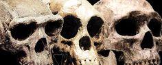Bradshaw Foundation Origins exploring the fossil record History Projects, Arts Ed, Stone Age, Prehistory, Anthropology, Origins, Rock Art, Archaeology, School Stuff