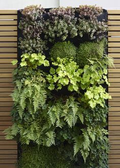 Florafelt vertical planters hold a combination of maidenhair ferns Italian bellflower coral bells in various colors golden Creeping Jenny Corsican mint white redwood sorrel strawberry geranium and babys tears. Garden Wall Designs, Modern Garden Design, Backyard Garden Design, Backyard Landscaping, Landscaping Ideas, Vertical Garden Wall, Vertical Planter, Vertikal Garden, Landscape Bricks