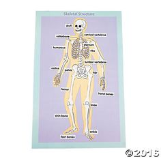 Skeletal Human Body Giant Sticker Scenes