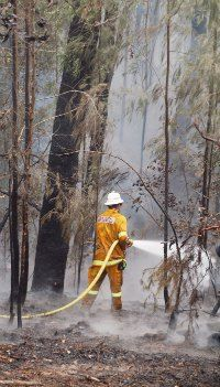 Current environmental issues | NSW bushfires