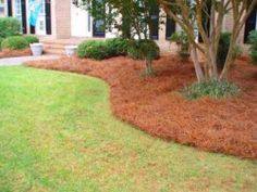 Landscaping : pine straw : pine mulch : curved bed Pinestraw placed out front before christmas. Pine Straw Landscaping, Mulch Landscaping, Front Yard Landscaping, Landscaping Ideas, Backyard Ideas, Garden Ideas, Landscaping Supplies, Patio Ideas, Lawn Sprinklers