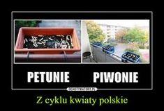 Z cyklu kwiaty polskie Dank Memes Funny, Very Funny Memes, Wtf Funny, Man Humor, Life Humor, Funny Images, Funny Pictures, Funny Lyrics, Polish Memes