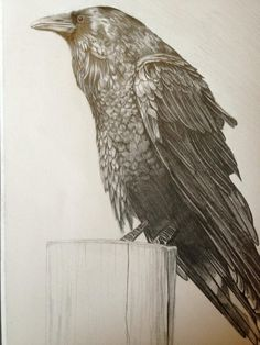 Raven art print - Limited edition, A4, hand numbered and signed