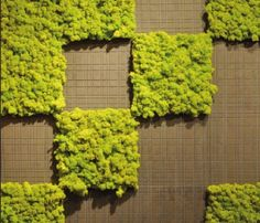 MossTile, muschi per realizzare giardini verticali