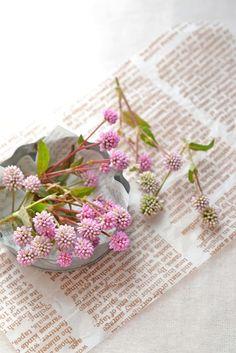 園芸店で販売されている苗は、「一年草」、「多年草」、「宿根草」とカテゴリ分けされていることが多いですね。宿根草(しゅっこんそう)は、多年草の一種で一度植えると花期には毎年花を咲かせてくれる人気植物です。毎年植える必要がある一年草のように手間がかかりません。ナチュラルガーデンにおすすめの宿根草を花期別にランキングにしました。