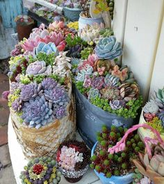 60 Gorgeous Succulent Planters Instantly Beautifying Your Home - Healthy Plants Colorful Succulents, Succulents In Containers, Cacti And Succulents, Planting Succulents, Planting Flowers, Propagate Succulents, Cactus Plants, Succulent Landscaping, Succulent Gardening