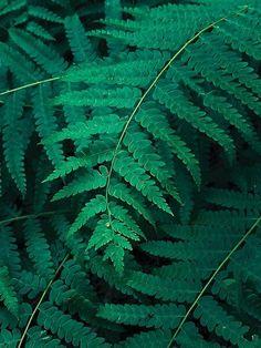 Green Fern Leaf, Moody Foliage Cute Garden Ideas, Ferns, Hygge, Summer Time, Sea Shells, Woods, Plant Leaves, Deco, Green