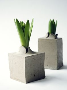 """Disposable flower pot made of unburned clay""