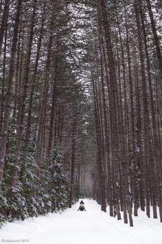 The magical forest in Huntsville, Ontario... At one point I was riding through the narrow trail as giant chunks of snow fell off the trees. It was truly a 'Lion, The Witch and the Wardrobe' moment.