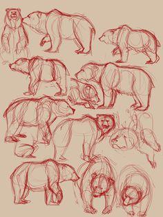 Bear sketches 3