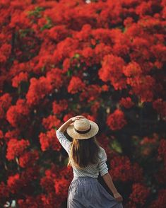 I need some more red in my life. looking forward to visiting this old flame tee again next month! by jarradseng Flame Tree, Old Flame, Adventure Photography, Poses, My Favorite Color, Creative Inspiration, Character Inspiration, Cool Pictures, Hipster