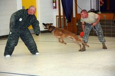 Spc. Christopher Canfield, military working dog handler, lets his dog, Spike, go after David Martin, Stephens County deputy sheriff and police dog handler, acting as an assailant during aggressor control training at Sheridan Road Elementary School Ju get no-pay dog training courses check out http://FreeDogTraining.bestonlineproducts.net