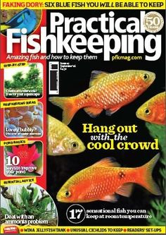 In this issue;  10 ways to improve your pond!  Faking Dory - six blue fish you WILL be able to keep  Hang out with the cool crowd - 17 Sensational fish that thrive at room temperature  A step by step guide to create an underwater tree for your aquascape  Get help and advice- Deal with an ammonia problem