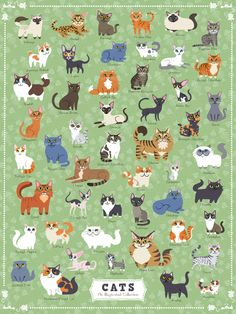 To all my animal loving friends and cat lovers this puzzle is for you! Product Details 500 Piece Jigsaw Puzzle Finished Puzzle Size: Made in USA Recommended Age: Years Domestic Cat Breeds, Cat Whisperer, F2 Savannah Cat, My Animal, Animal Drawings, Cat Art, 500 Piece Jigsaw Puzzles, Cats And Kittens, Cat Lovers
