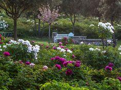 Il Centro Botanico Moutan sorge nello splendido contesto della campagna dell'alto Lazio e riunisce in un'area di circa 15 ettari la più vasta collezione al mondo di peonie cinesi.