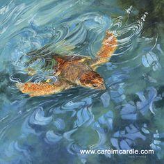 """Aqua Champion"" Acrylic on canvas 30"" x 30"" SOLD - prints available to order. Contact carol@carolmcardle.com"