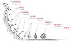 Great explanation and visualization of bonsai styles.
