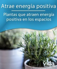 Plantas y energía