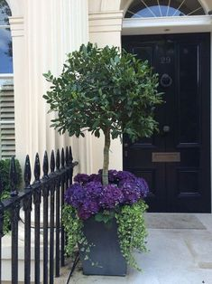 Beautiful topiary front door planter with hydrangeas