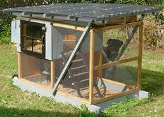 Chicken coop plans to purchase. (Plus I love the Rotty that is peeking in the coop from behind)