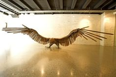 The largest known bird of prey to have lived. Haast's eagle-Most amazing extinct animals All Birds, Birds Of Prey, Pretty Birds, Beautiful Birds, Eagle Bird, Extinct Animals, Prehistoric Creatures, Big Bird, Prehistory