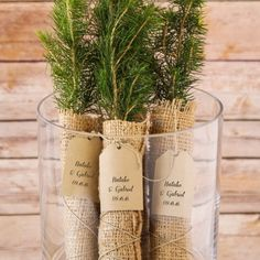 For a truly green wedding, there's nothing better than this personalized evergreen tree seedling favor.
