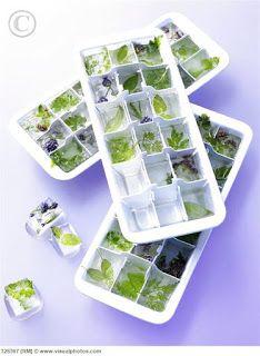 A CIDADE DAS HORTAS: Congele ervas aromáticas frescas