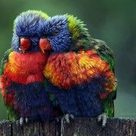 Community Post: 5 Cute Animal Photos To Cheer You Up - On to the bird family! All birds are cute, but this parrot couple wins the prize for today! shares 5 of the cutest animal photos with us. Pretty Birds, Love Birds, Beautiful Birds, Animals Beautiful, Cute Animals, Funny Animals, Wild Animals, Beautiful Couple, Beautiful Things