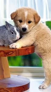 Our pets are not our entire life, however they make our lives entirety. Read more to click here http://stevenroy3rd.jimdo.com/