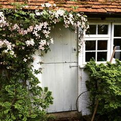 Why not let your plants grow all over your garden shed?