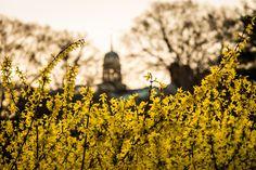 Sure sign of spring. Wake Forest University, Winston Salem, Spring Sign, Around The Worlds, Community, Magazine, Flowers, Plants, Instagram