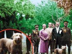 Cumhuriyetimizin kurucusu, ulu önderimiz Atatürk hayvanlara karşı hep özel ilgi göstermiş, hatta bazılarını sahiplenerek özel olarak bakımıyla ilgilenmişti. Bunlardan Alp, sonrasında Alber ve birçok kitapta bahsi de geçen Foks adındaki köpekleri Atatürk'ün yanında sadık dostları olarak tarihteki yerini aldı. Detaylar ajanimo.com'da.. #ajanimo #ajanbrian #19Mayıs #MustafaKemalAtatürk #GençlikveSporBayramı #köpek #dog #hayvan #animal