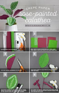 Crepe Paper Calathea Plant - Make your easy crepe paper calathea plant at https://liagriffith.com/crepe-paper-calathea-plant/ * * * #paper #papercraft #paperplant #paperart #fauxglow #diyhome #diyidea #diyinspiration #diyhomedecor #crepepaperrevival #crepepaper #crepepaperflowers #madewithlia