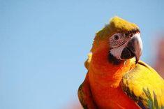 34 Stunning Pictures Of Exotic Birds Cute Birds, Pretty Birds, Beautiful Birds, Pink Cockatoo, Bird Calls, Exotic Birds, Bird Feathers, Animal Pictures, Cute Animals
