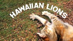 The Lanai Animal Rescue Center - Lanai, Hawaii by Ohana Films. Please visit http://lanaianimalrescue.org for more info.