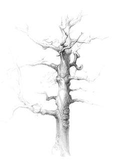 Дуб, Живопись, рисунки, рисунок, графика, дерево, набросок, эскиз, деревья, просмотров 1480