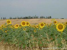 Valdichiana Siena Tuscany