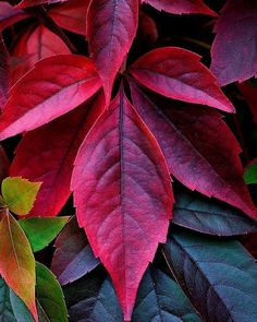 Gardening Autumn - Le bel automne - With the arrival of rains and falling temperatures autumn is a perfect opportunity to make new plantations Leave In, Autumn Day, Autumn Leaves, Tree Leaves, Plant Leaves, Flor Tattoo, Belleza Natural, Nature Wallpaper, Belle Photo