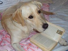 Un alto en la lectura