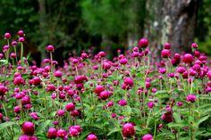 ein Teil der Blumenwelt- #AsiaticaReisen