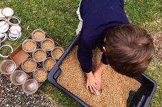 Mushroom Cultivation: Making Grain Spawn