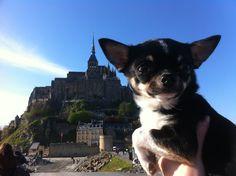 Souvenir du Mont-St-Michel avec mon tout petit chien.