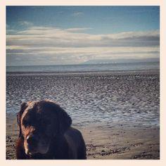 Small dog. Big beach.