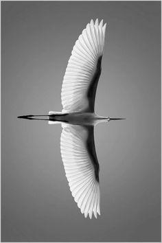 Beautiful Birds, Animals Beautiful, Bird Wings, Canon Photography, Photography Photos, Lifestyle Photography, Tier Fotos, 2d Art, Photo Reference
