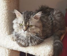 Wisconsin cat rescue gives Egyptian cat a second chance at a happy ending.